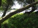 Lužní prostředí s vrbami u Labe pod soutokem s potokem Mühlenbach.