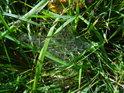 Pavučina mezi stébly trávy u železničního mostu, Lauenburg.