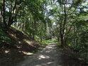 Lesní cesta nad pravým břehem Labe pod městem Lauenburg.