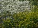 Vodní rostlinstvo ve vysychajícím slepém rameni Labe nad městem  Wittenberge.