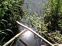 Slunce se odráží za přirozeně padlými klacíky v potoce Roudnička v jeho samém dolním toku těsně před jeho soutokem s řekou Labe.