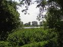 Divoké lužní travní porosty na pravém břehu Labe ve městě Lutherstadt Wittenberg.