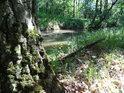 Zátiší v lesním úseku na levém břehu Opatovického kanálu nad Břehy.