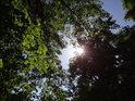 Silné jarní Slunce si nachází cestu mezi olšemi na Opatovickým kanálem.
