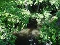 Opatovický kanál je v Břehách již poměrně málo vodnatý.