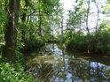Opatovický kanál nad lesním mostem, přes který se dá dostat z Bohdanče do Dolan.