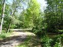 Stekla po pravém břehu Opatovického kanálu u Bohdanče.