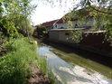 Vodním porostům se v Opatovickém kanále daří.