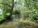 Opatovický kanál je v Podůlšanech sevřen pobřežními porosty.