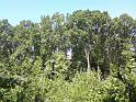 Luh na levém břehu Labe mezi Kovanicemi a Nymburkem.