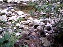 Pravobřežní přítok, který stéká z Dívčí stráně, předává své vody Labi.